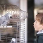 HealthyChildren.org - Pet Birds and Psittacosis Infection