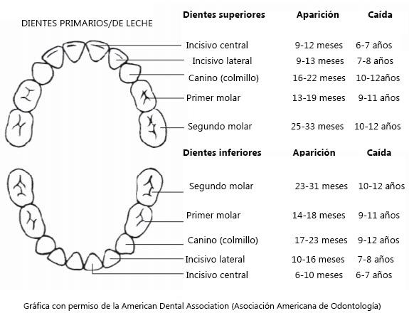 El primer diente del bebé  7 cosas que los padres deben saber ... fb6907ac3733