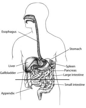 symptomviewer - HealthyChildren org